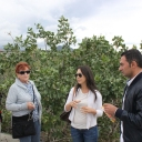 Sicily Tour 2015 - Visit at Pistachio Farm in Bronte