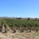Visit at Tormaresca Winery in Puglia